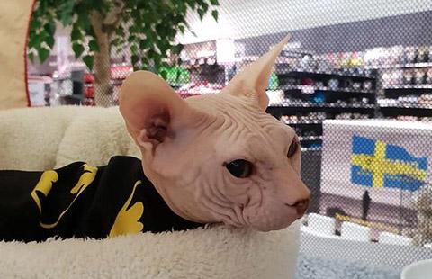 Kattens Dag