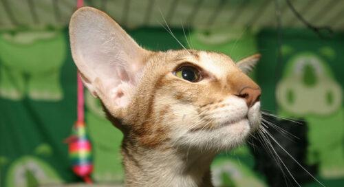 Var med och fira Kattens dag 2019