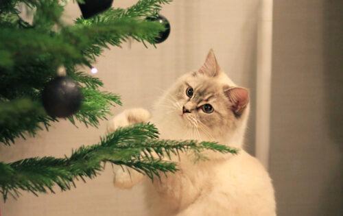 Julavslutning med glöggmys