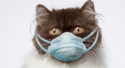 Coronavirusets påverkan för Sydkatten