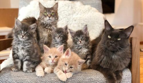 Nya krav om att registrera anläggning om du har kattuppfödning